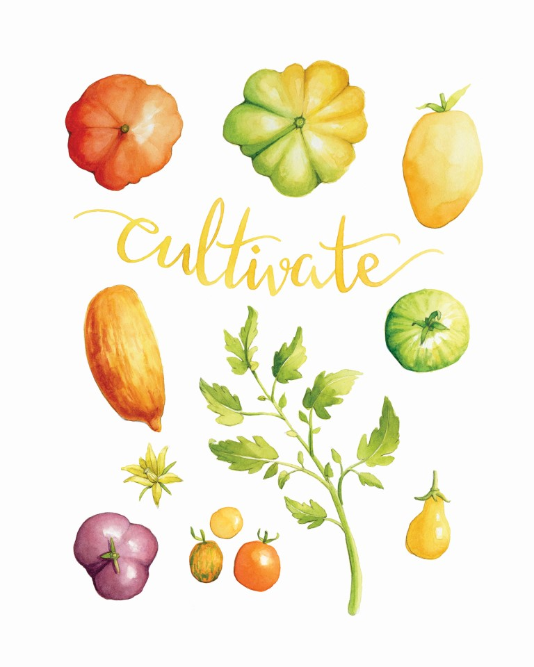 Heirloom Tomatoes Watercolour Illustration by Alicia's Infinity - www.aliciasinfinity.com