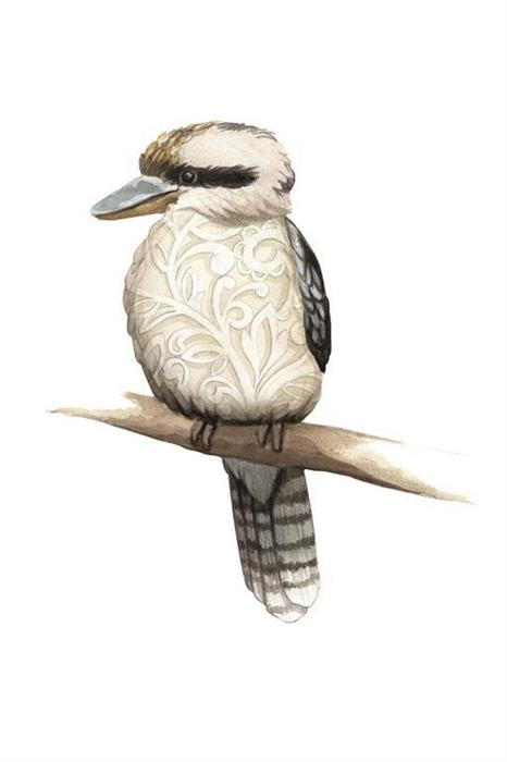 Kookaburra with Lace Belly Watercolour Illustration by Alicia's Infinity - www.aliciasinfinity.com