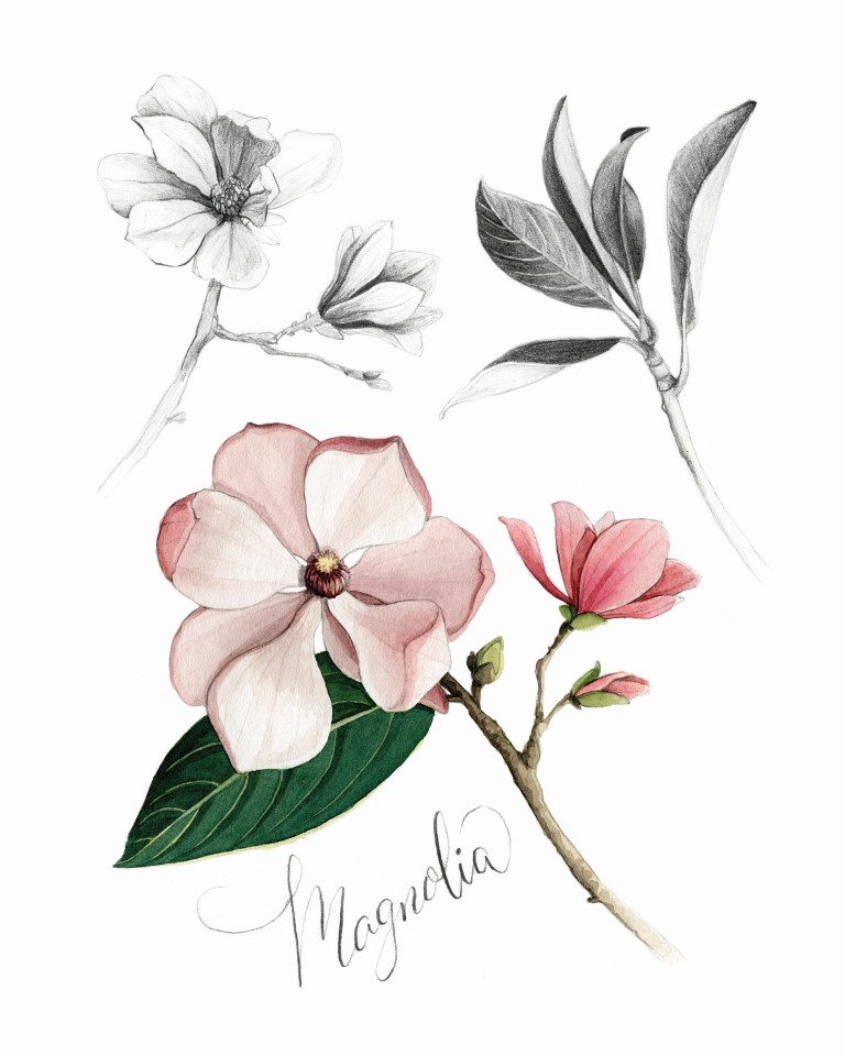 Magnolia Watercolour Illustration by Alicia's Infinity - www.aliciasinfinity.com