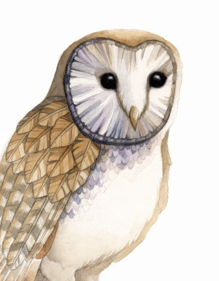 Feathered Owl Watercolour Illustration by Alicia's Infinity - www.aliciasinfinity.com