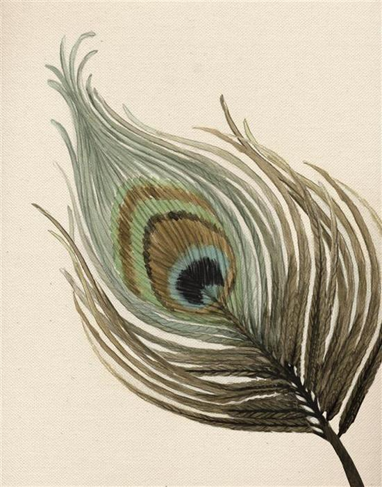 Peacock Feather Watercolour Illustration by Alicia's Infinity - www.aliciasinfinity.com