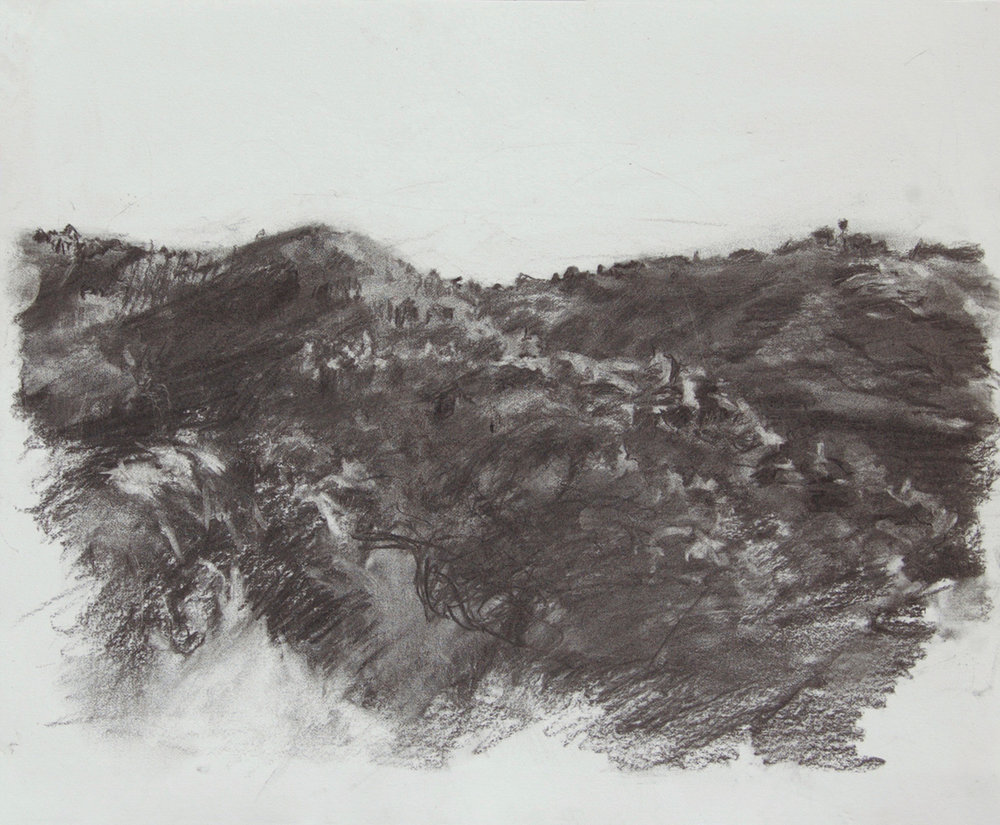 Bishop Pine    2018  charcoal on paper  14 x 17 in.
