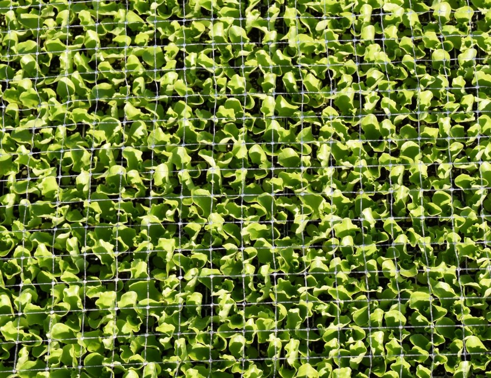 Plantel-Seedlings-1024x788.jpg