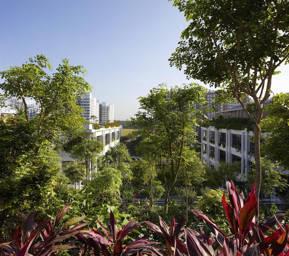 Serie_Architects_Oasis_Terraces_Singapore_©Hufton_Crow_016.jpg