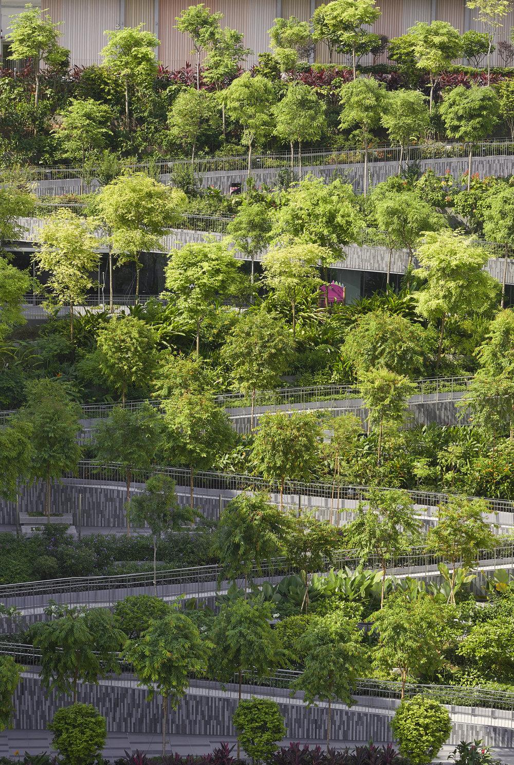 Serie_Architects_Oasis_Terraces_Singapore_©Hufton_Crow_015.jpg