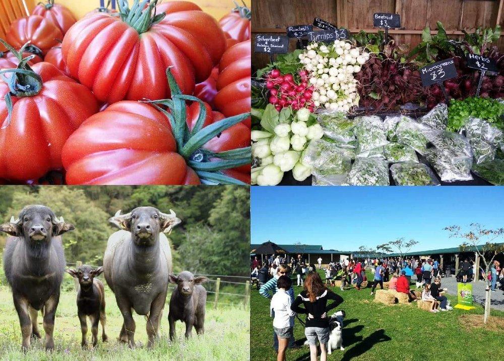 cleveland v farmers.jpg