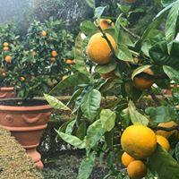ham gardens fruit.jpg