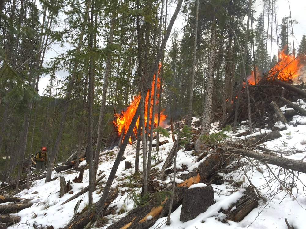 Pile burning in the winter in the Colorado high country.