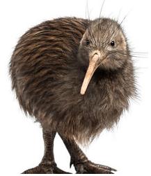 kiwi bird.png