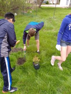 thumbnail_Serving - Tree Planting IMG_20170429_110445107.jpg