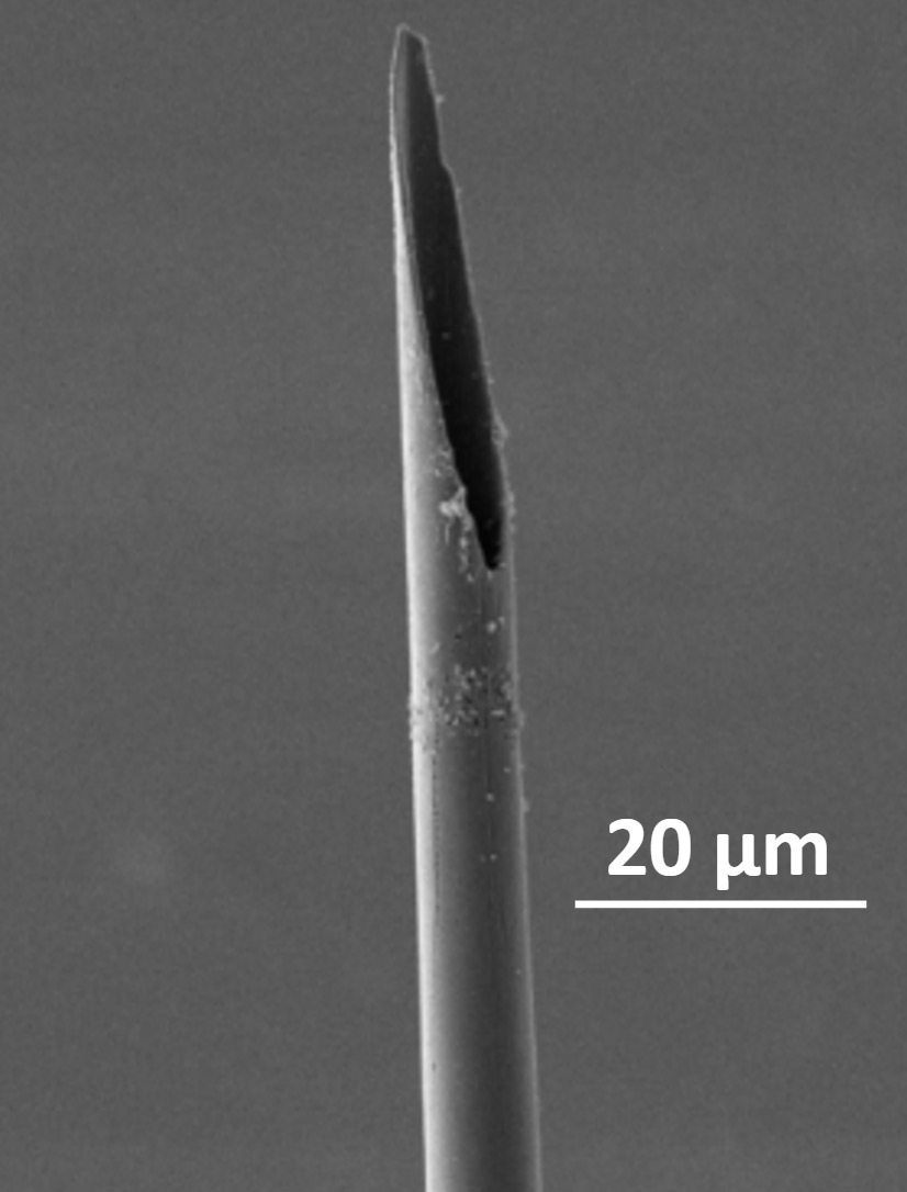 microcavity-electrodes-b.jpg