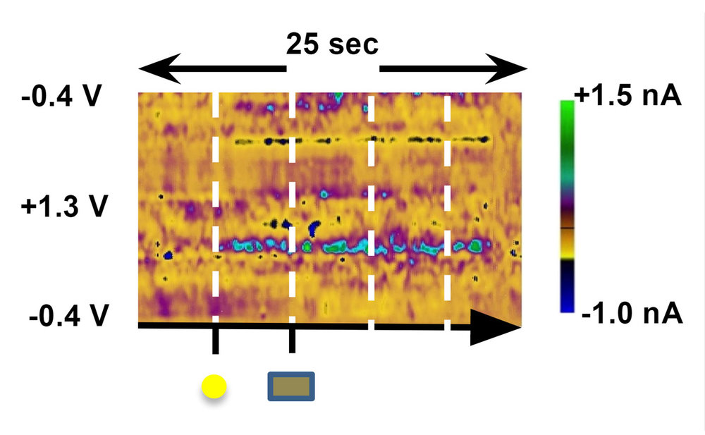 neurochemical-mechanisms-impulsive-decision-making-b.jpg