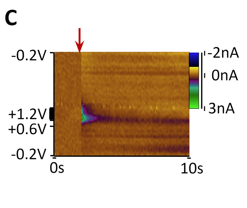 optogenetic-control-c.jpg