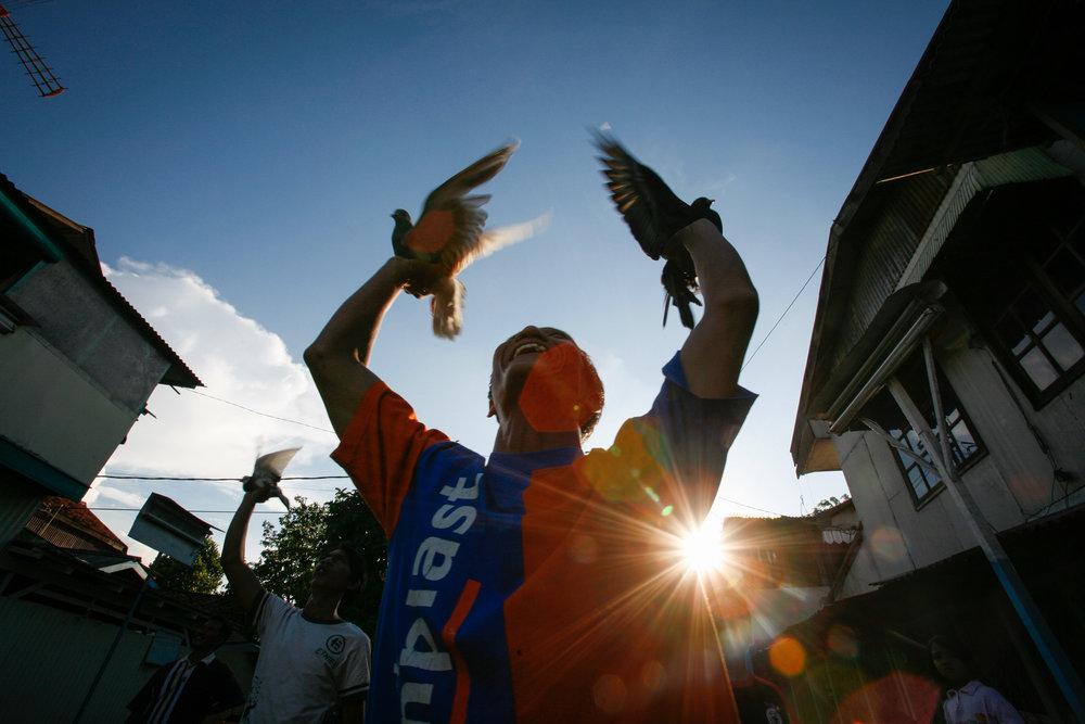 WORLD HEALTH ORGANISATION - BIRD FLU IN INDONESIA