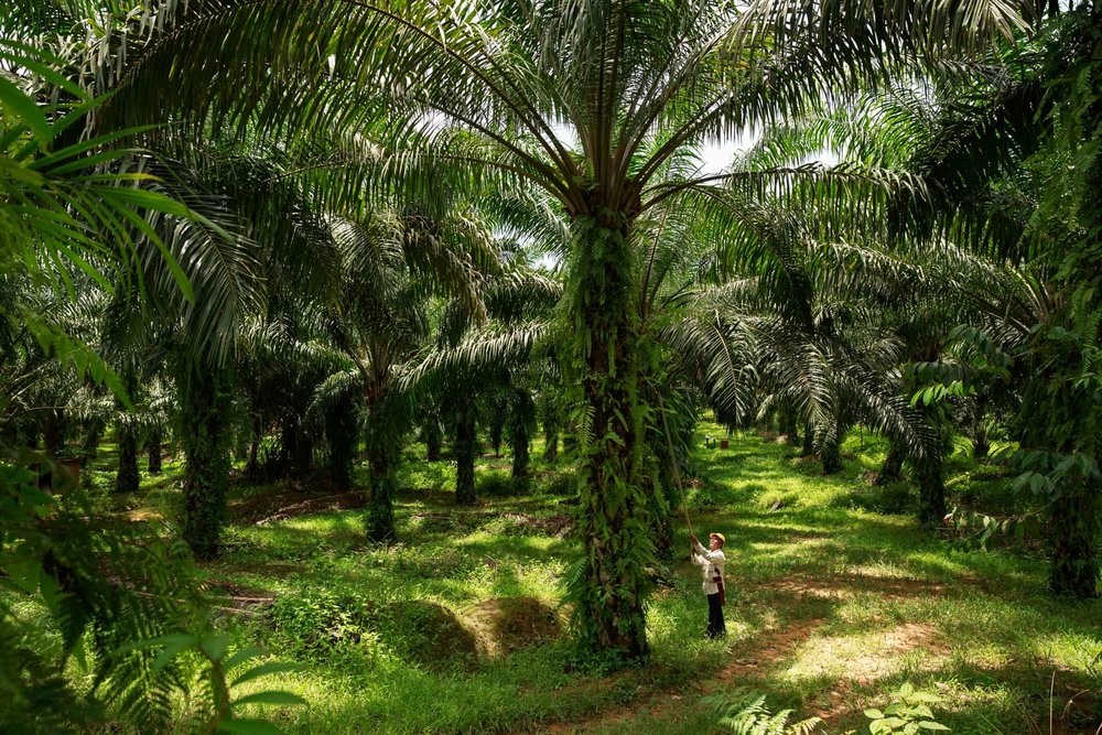 sustainable-palm-oil-photography-008.JPG