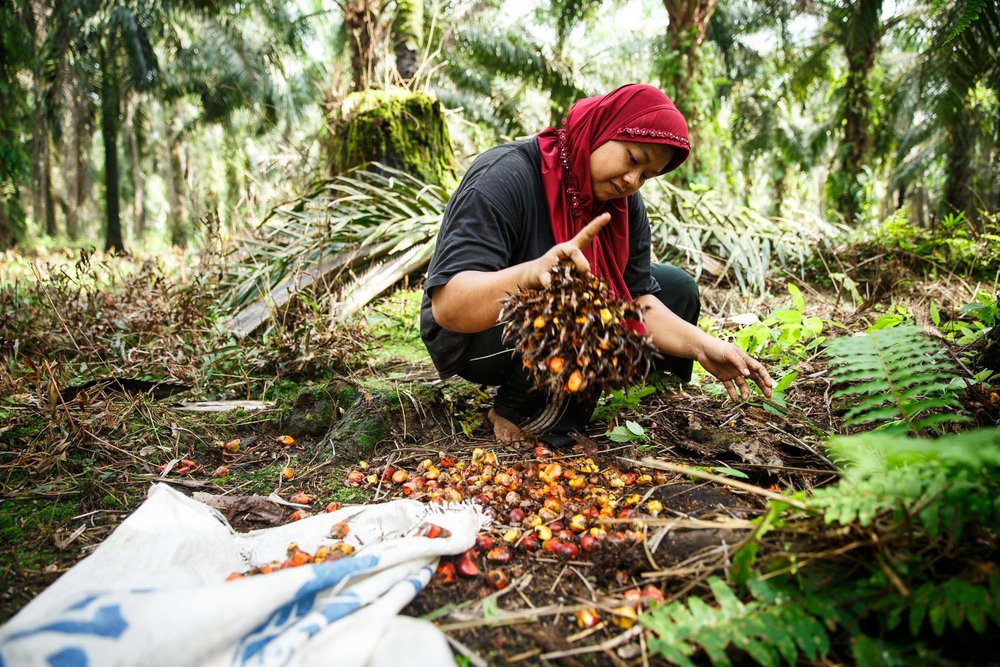 RSPO - SUSTAINABLE PALM OIL