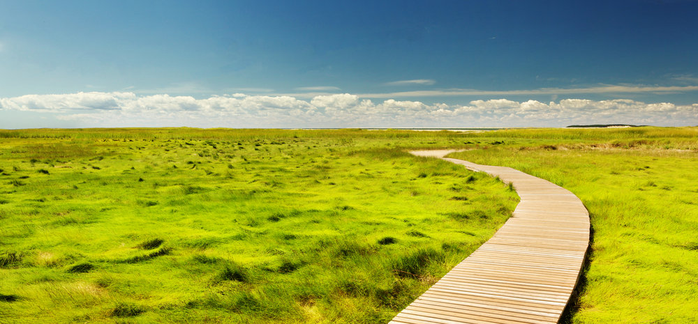 Boardwalk through a grassy field with blue skies on the horizon. A free and beautiful landscape for seeking resolution to past traumas, anxiety treatment, overcoming phobias, relieving stress, overcoming anger, increasing self confidence, healing chronic physical symptoms. Stop feeling hopeless.
