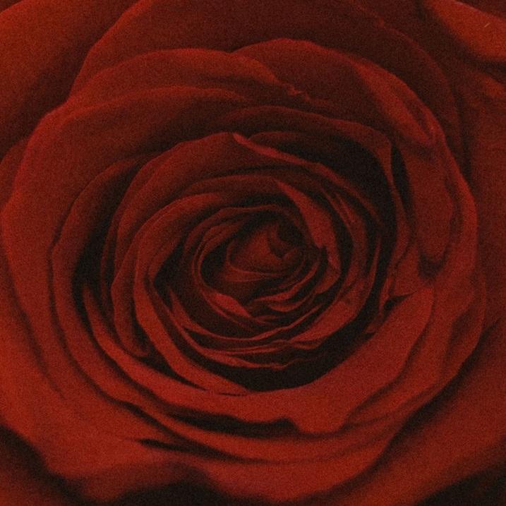 achintya-ameya-roses-9787.jpg