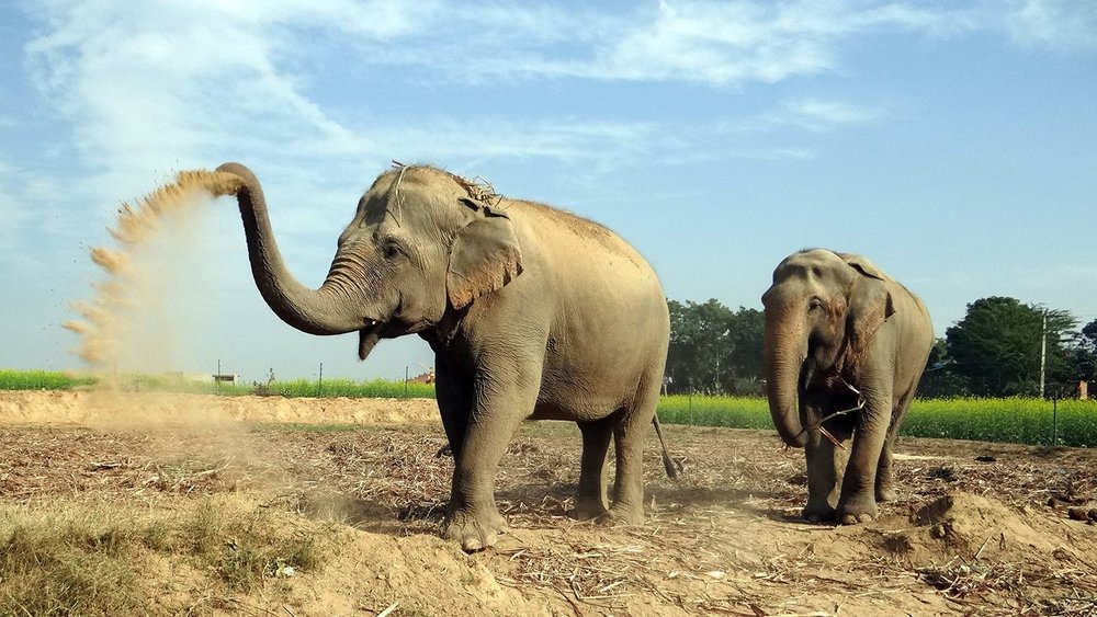 Elephants India.jpg
