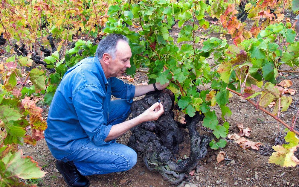 Ron-beside-old-Carignan-vine-luminar-cropped.jpeg