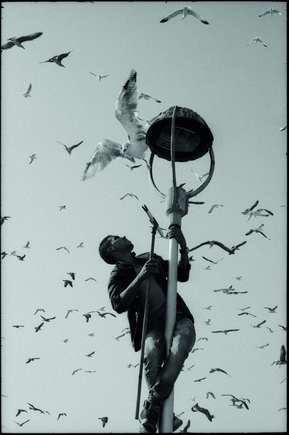Cole Flynn Quirke Bird.jpg
