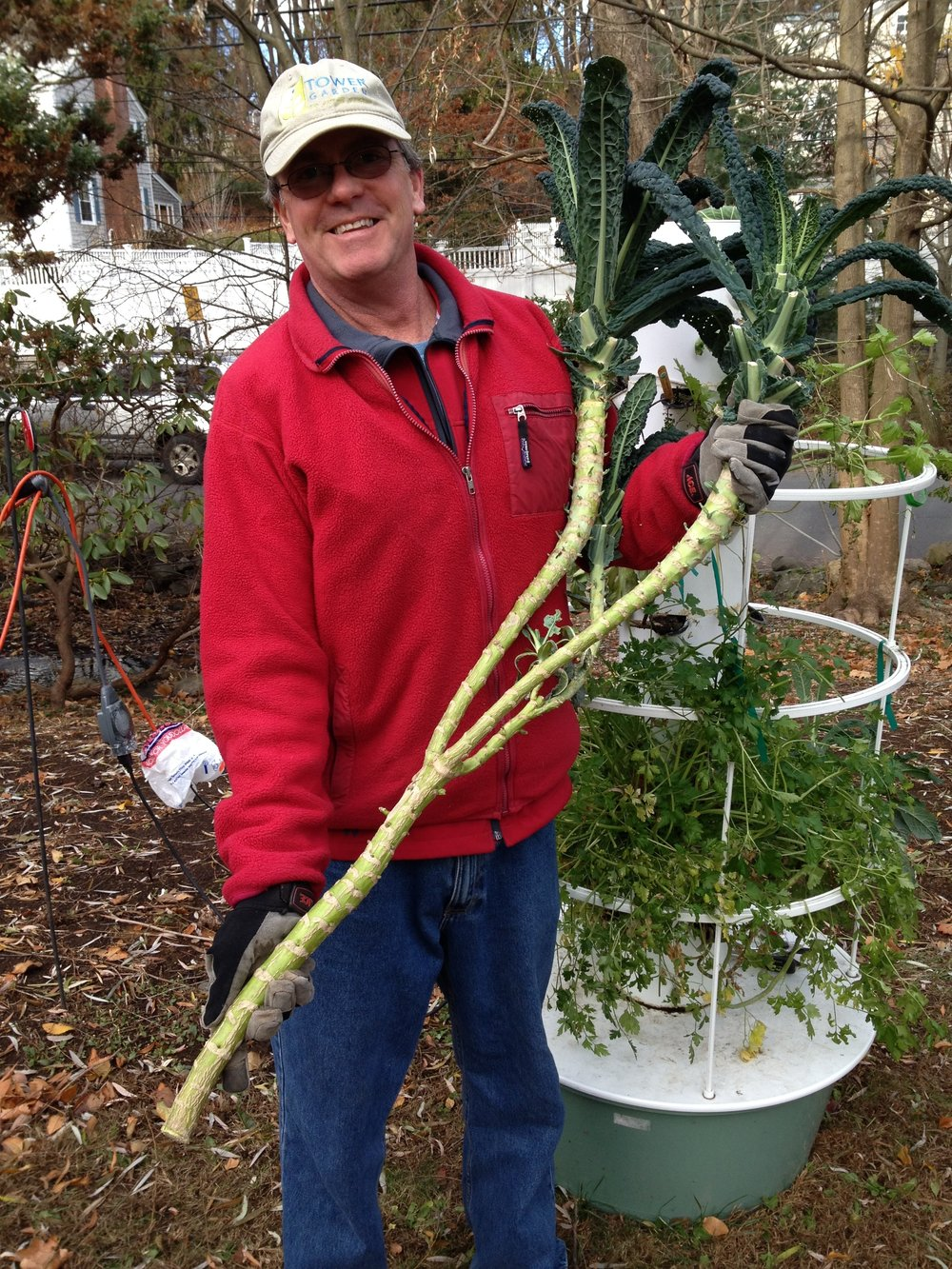 Tower Garden Kale.JPG