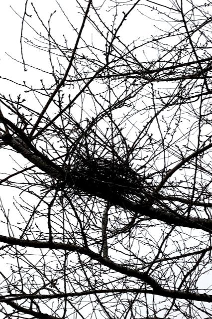 An empty bird nest
