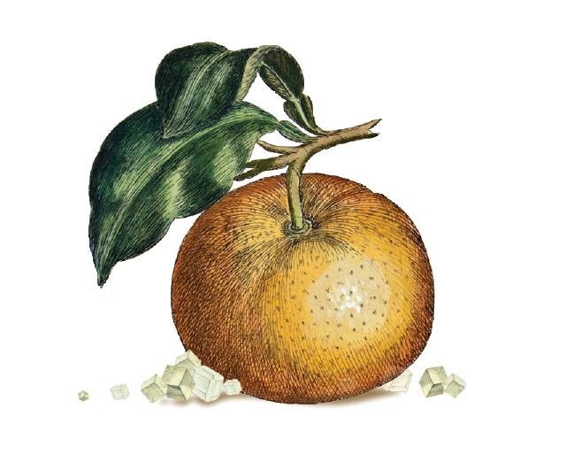 tangerine-salt.png