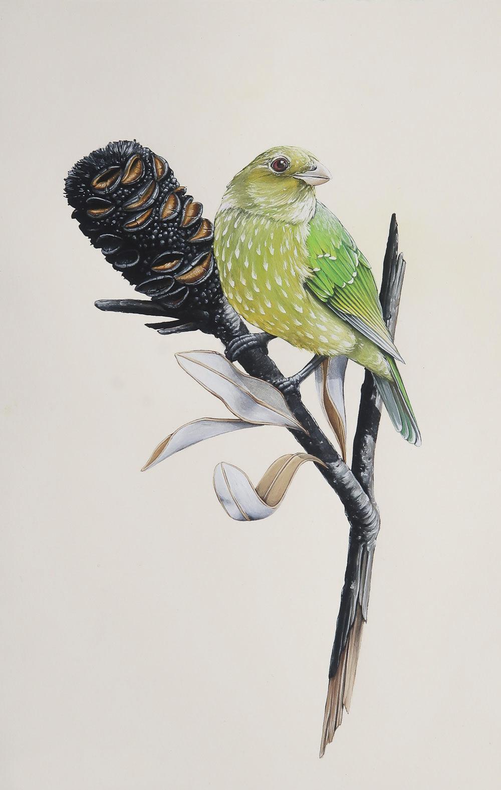 'Green Cat-Bird'