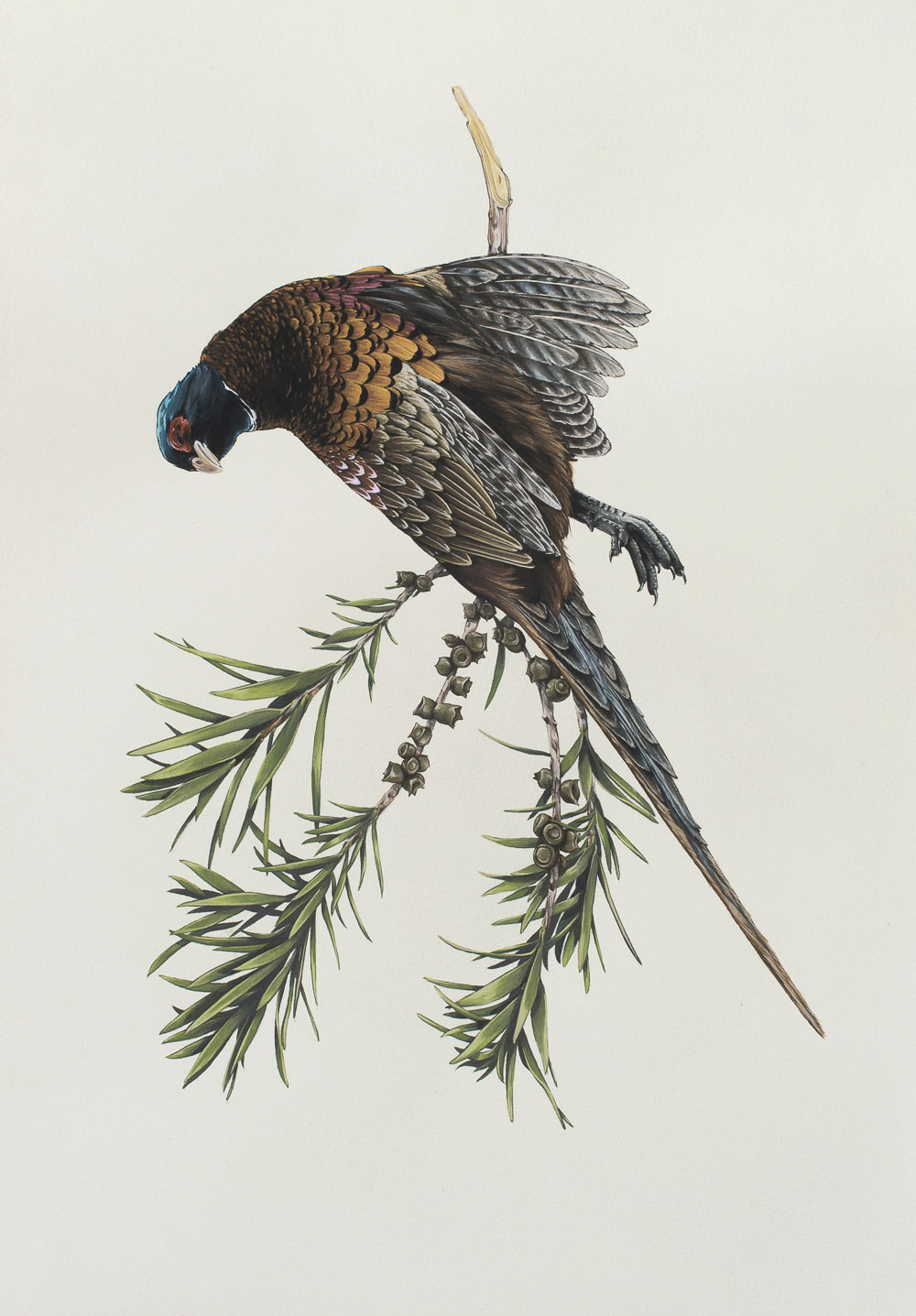 ThomasJackson_Florilegium_Ornithology.JPG