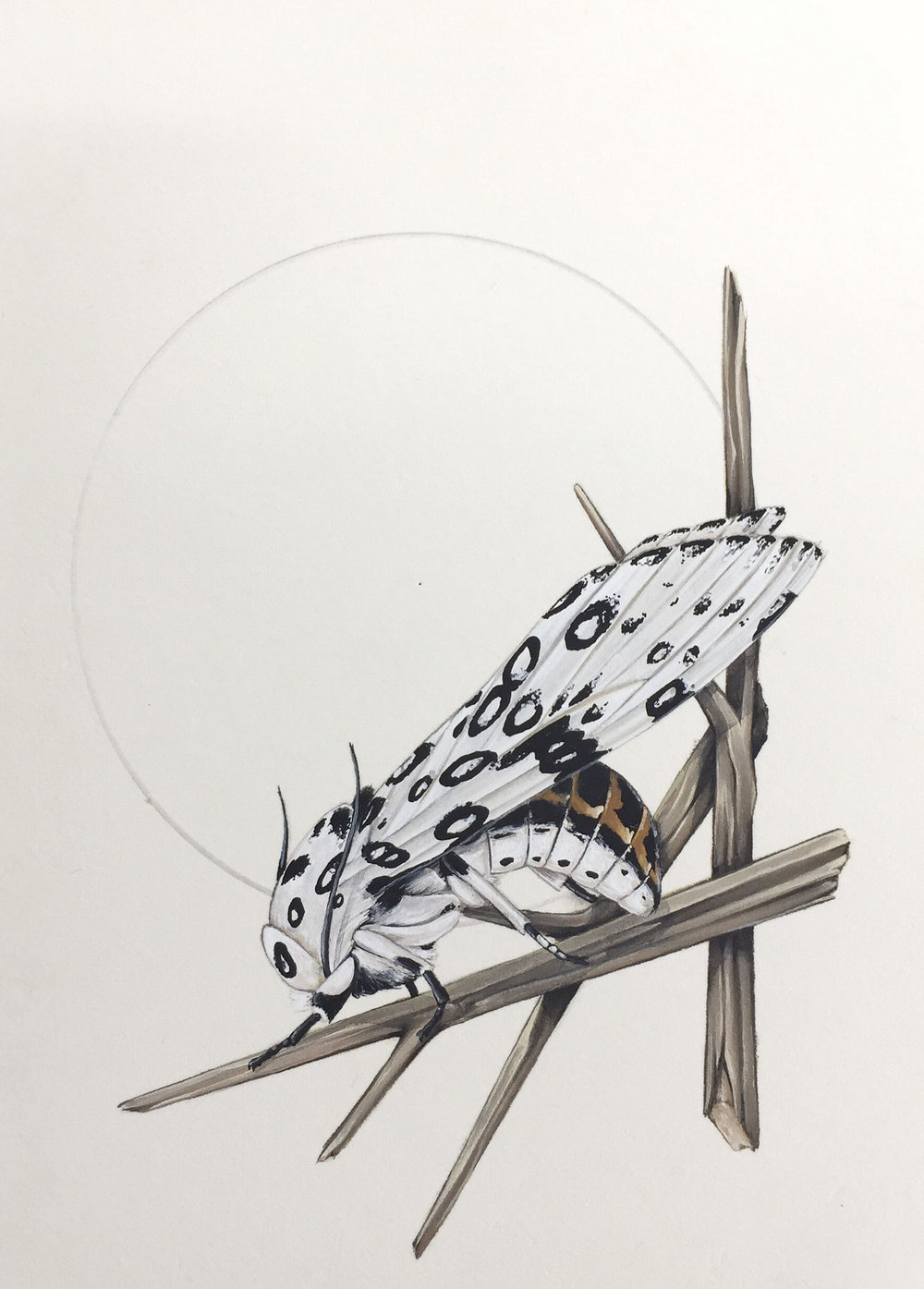 'Leopard Nest'