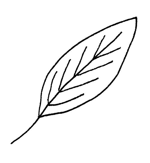 leaves5small.jpg