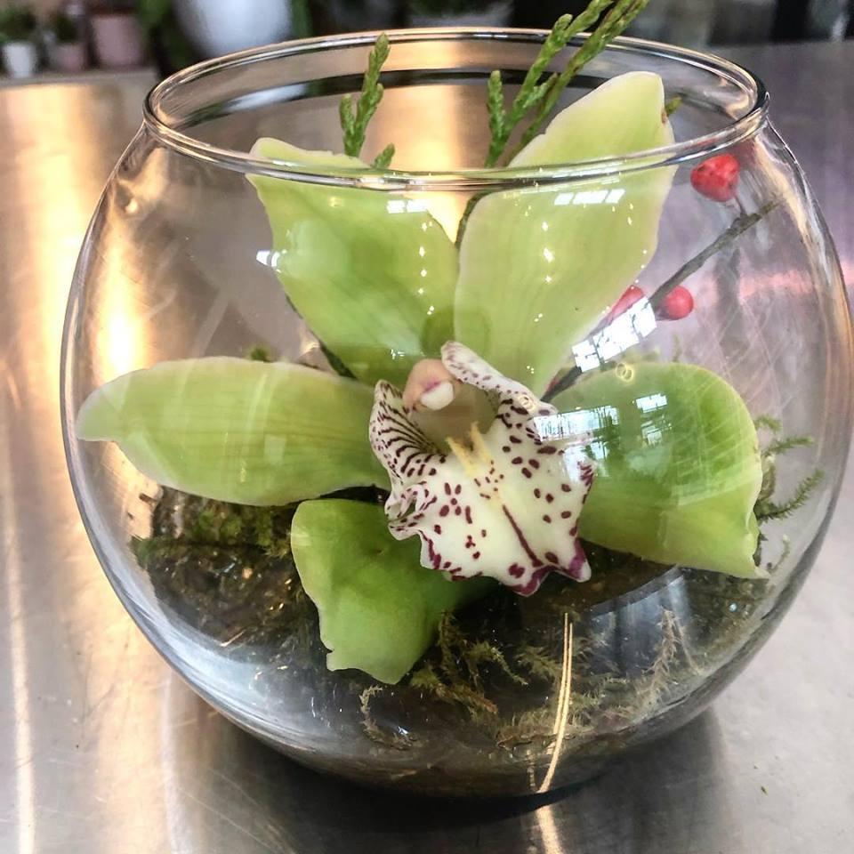 orchid in a terrarium.jpg