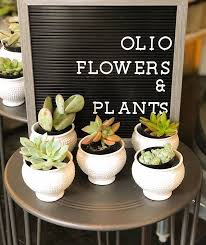 Small potted plants at Olio Flowers and Plants.jpeg