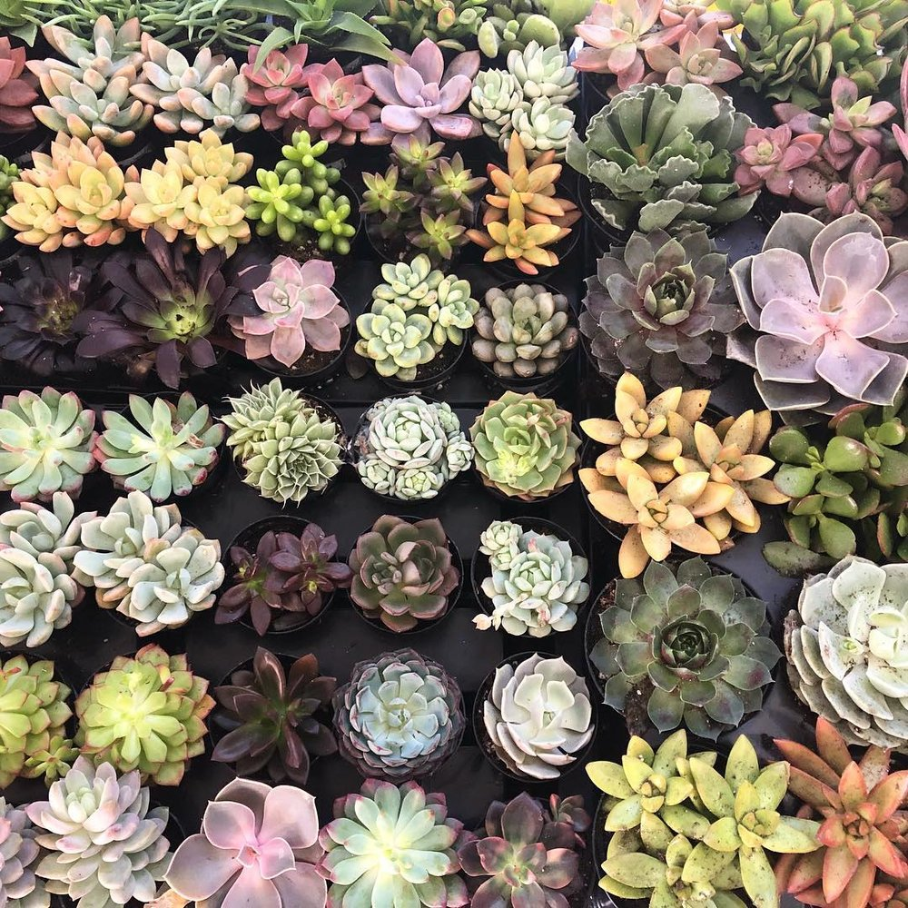 house plants - House plants are a great way to liven up any space whether for yourself or someone else. We offer many different kinds of plants from mini succulents to the more obscure.