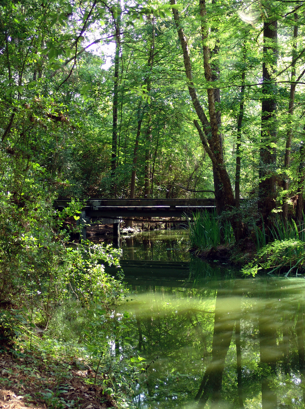 Forest_Bridge_in_The_Woodlands.jpg
