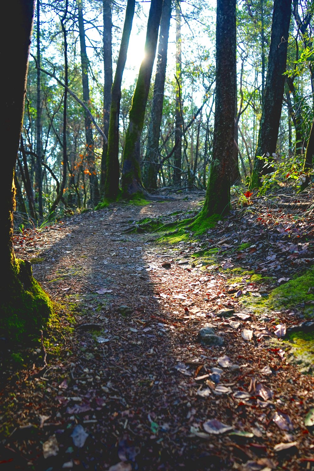 """The 1 mile 'Hike In' Option AKA """"History Hike"""" from Bothe Park Is a great way to get thirsty as well as clearing your mind! We like to call it the  """"Firkin Hike Option"""" !"""