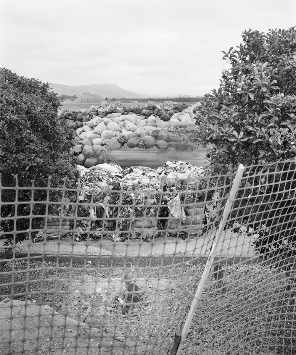 Agricultural Plastic, Santa Maria Landfill, CA.2017
