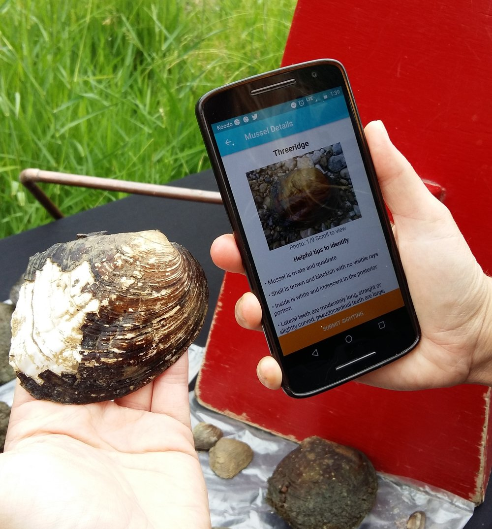 We have collected a few samples to test and identify. The app was able to identify most of the mussels, except for a few that required an expert eye from the Department of Fisheries and Oceans Canada.