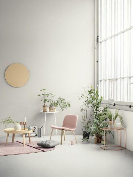 decoration plante verte , maison habitat.jpg