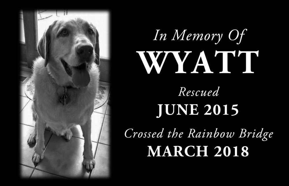 Wyatt_layout.jpg