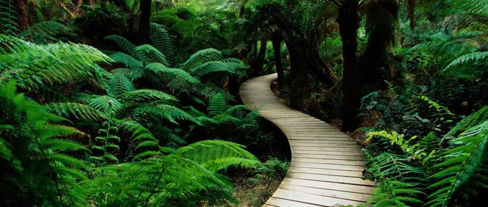 Pathway Image.png