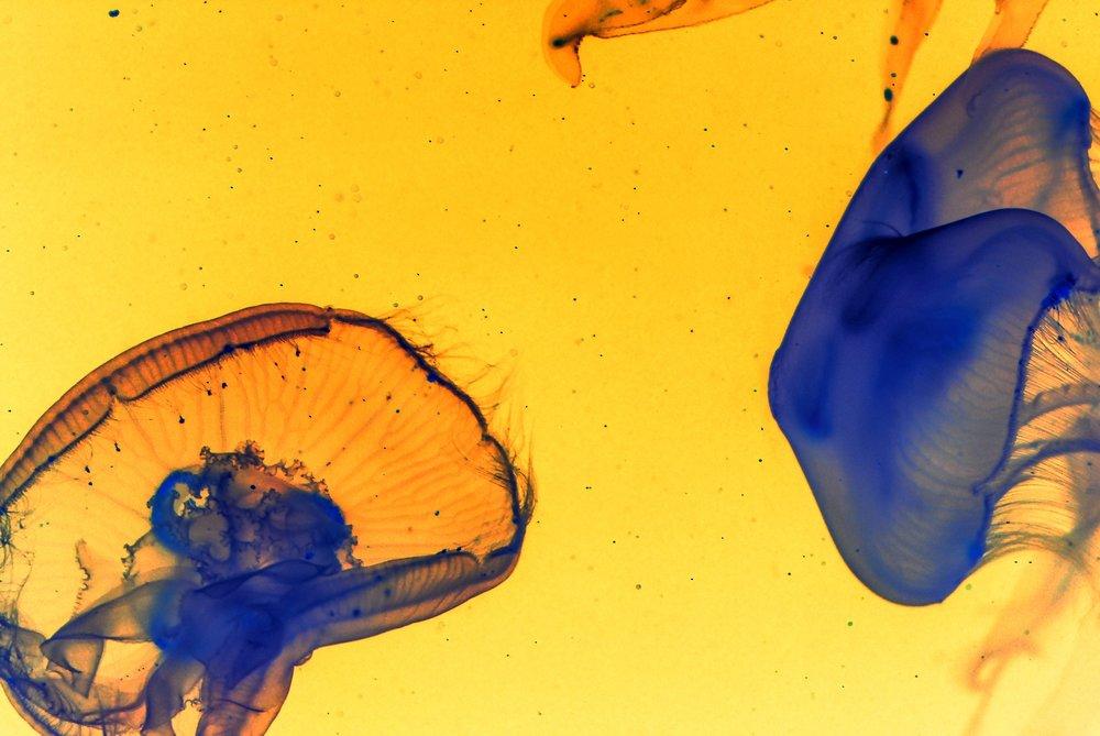 dos-medusas-contacto-maria-de-marcos