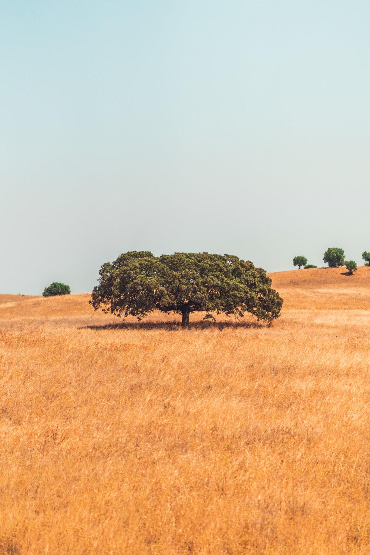 alentejo-tree.jpg