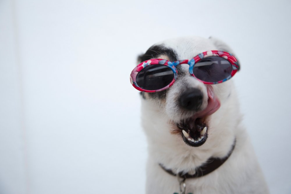 About - Learn more about the business, the groomers and get your questions answered.