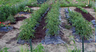 photo gardens