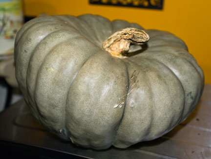 blue pumpkin photo