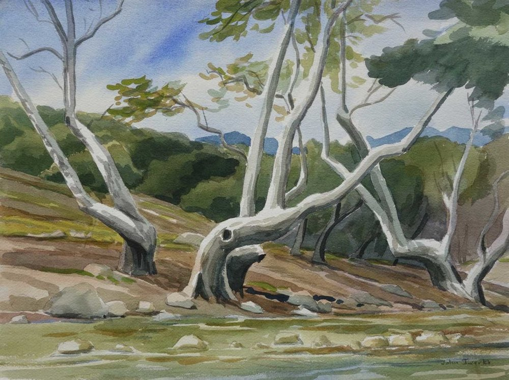 Creekside Sycamores