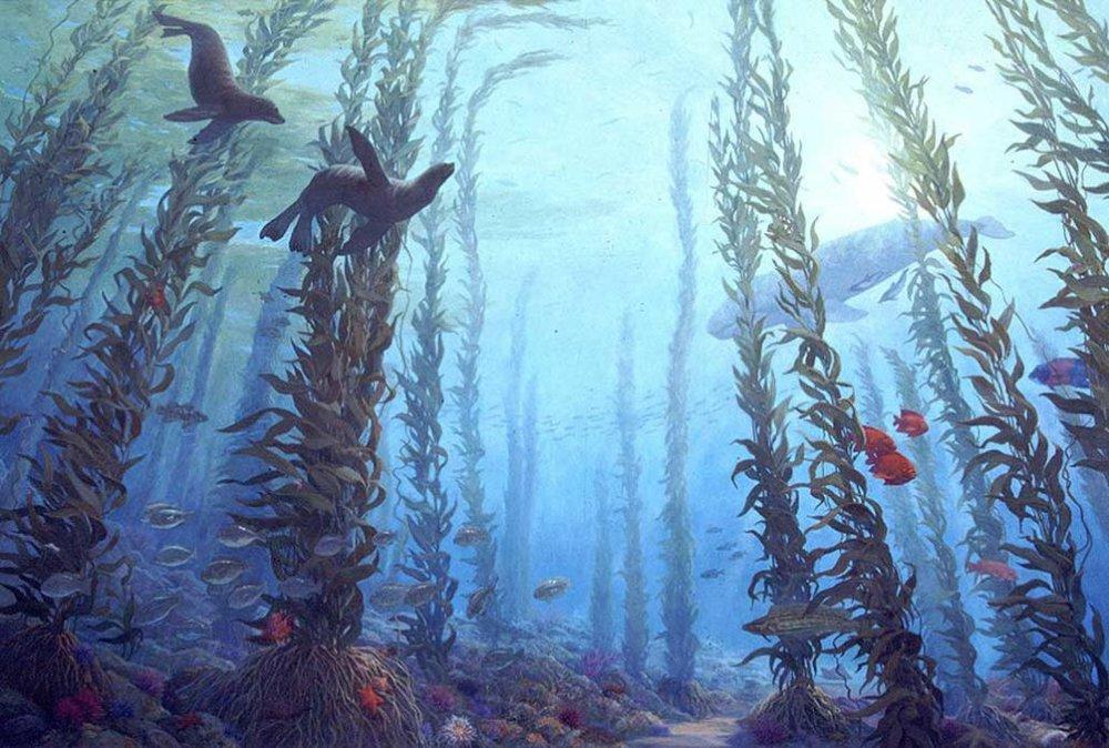 Kelp Forest Santa Barbara Island