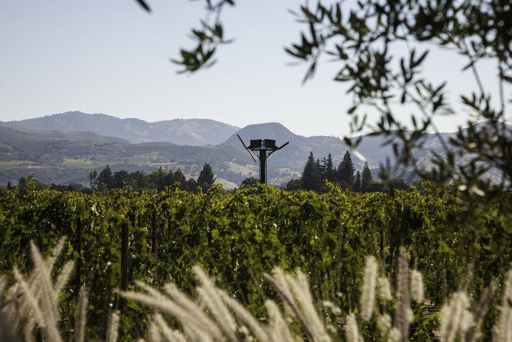 Bello Family Vineyards.jpg